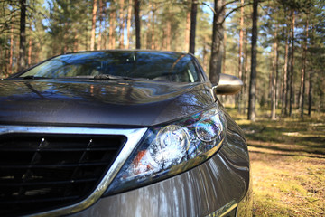 SUV car in the woods