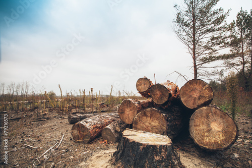 felled timber in the forest - 79216573
