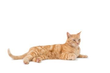 Cute cat lying alone