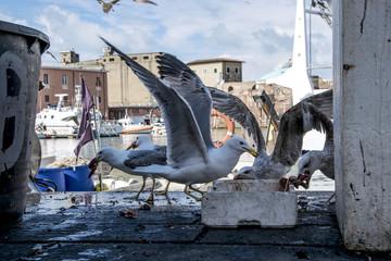 Gabbiani gli spazzini del mare