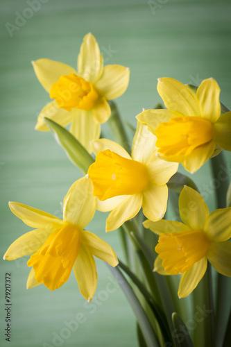 Aluminium Narcis Daffodils.