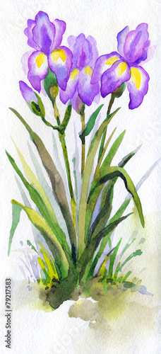 Watercolor landscape. Lush purple irises in the park
