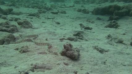 Подводный мир. Морская рыба. Змея