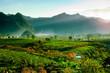 Leinwandbild Motiv Tea hills in Moc Chau highland, Son La province in Vietnam