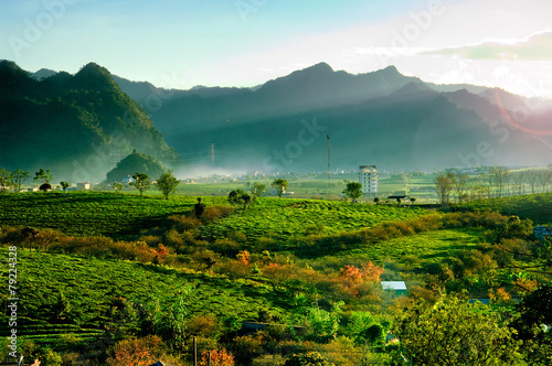 Foto op Canvas Heuvel Tea hills in Moc Chau highland, Son La province in Vietnam