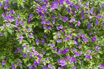 fleurs pourpres, flore Réunion