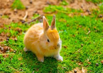 beautiful & cute small yellow rabit sitting alone