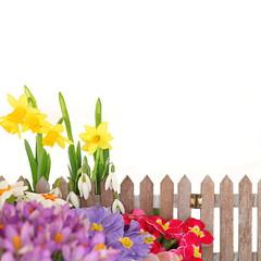 Frühlingshintergrund auf weiß