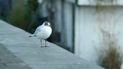 Lovely bird in Amsterdam