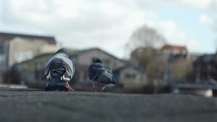 Two lovely birds in Amsterdam