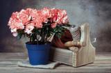 azalea in pot and garden tools