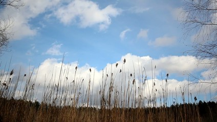 field, sky and Clouds - Landscape
