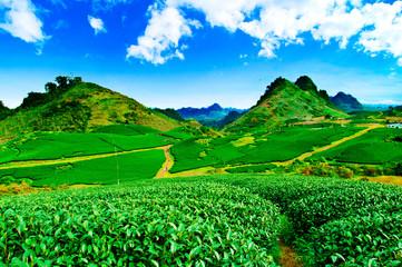 Tea hills in Moc Chau highland, Son La province in Vietnam