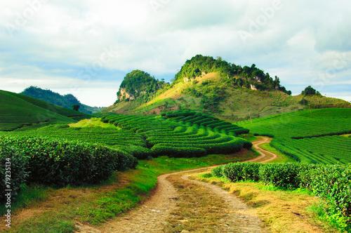 Tea hills in Moc Chau highland, Son La province in Vietnam - 79235134