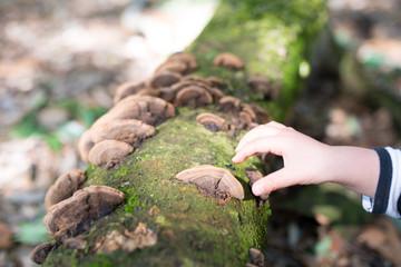 茸を触る子供の手