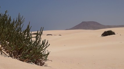 fuerteventura desert and bush
