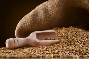 wheat grains timilia