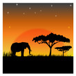 canvas print picture - Silhouettes of an elephant