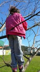 Subida al árbol