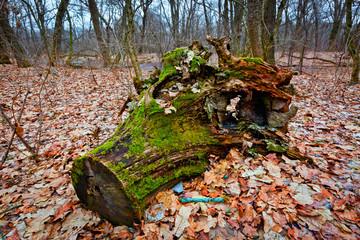 old wooden stump
