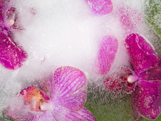 abstraction of purple orchids