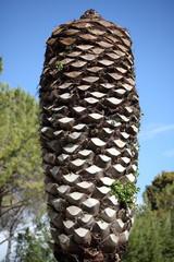 Palma attaccata dal Punteruolo Rosso
