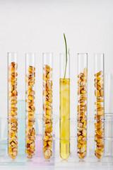 Genetically modified corn