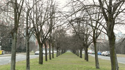alley of the bare trees - urban street with cars