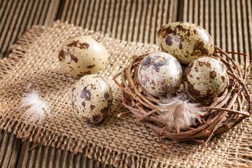 Quail eggs in the nest closeup