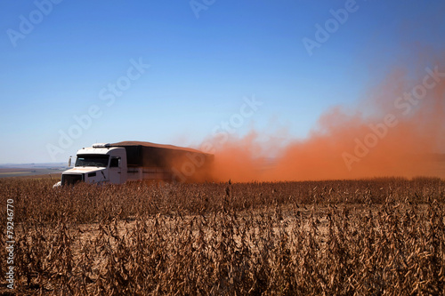 Truck carrying soybeans at harvest. - 79246770