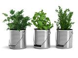 Fototapety Gewürzpflanzen