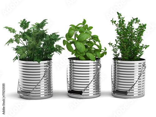 Gewürzpflanzen - 79250581