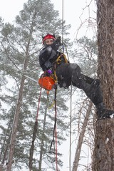 Arborist sawing wood chainsaw in a snowstorm