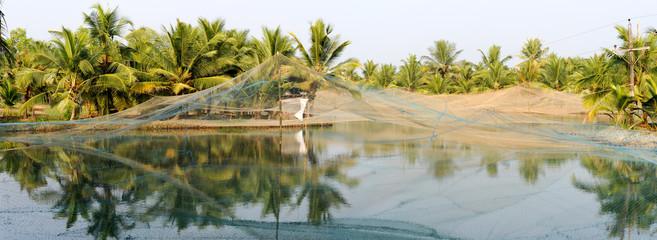 Shrimp farm on the backwaters of Kollam
