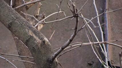 Tit on a tree