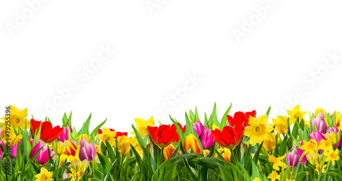 Aluminium Narcis Frühling Gutschein