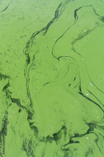 Staande foto Water planten blue-green algae or Cyanophyta from above
