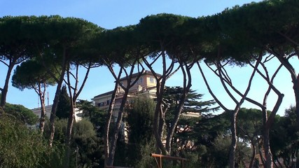Italian stone pines at  the public gardens of Colle Oppio