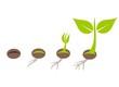Plant germination - 79261514