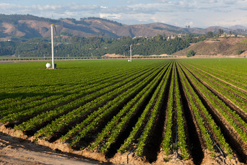 Agricultural field on sunny day