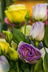 beautiful Lisianthus flower