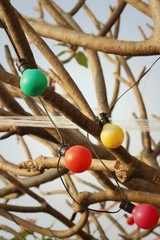 Vintage bulbs hanging on the tree at the park
