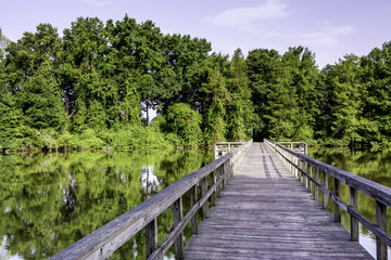Water and forest in Alabama with a foot bridge