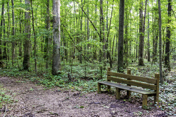 Trail leads through an Alabama park with a wood bench
