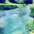 Spring water - 79271506