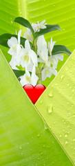 orchidée et coeur rouge dans feuille de bananier
