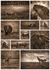 African safari black and white
