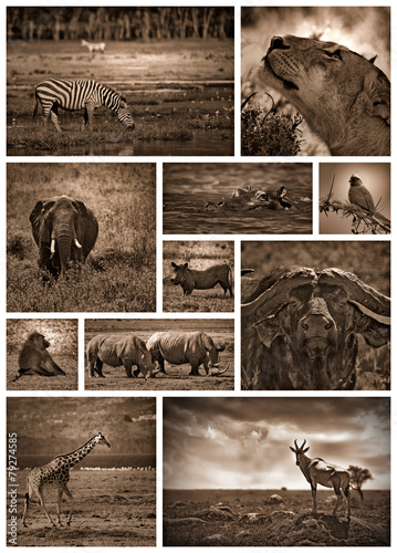 Fotobehang Leeuw African safari black and white