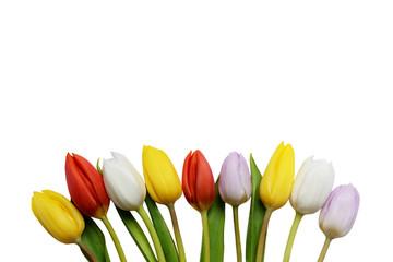 Tulipani su sfono bianco