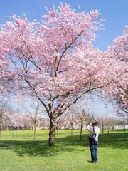 Kirschblüte und Fotograf